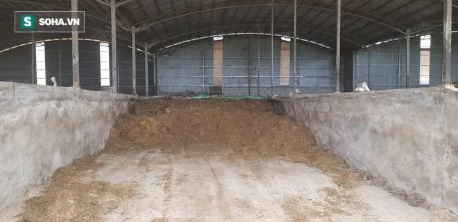 Ông Tam Asanzo làm trang trại bò: Chấp nhận bán phân không lãi trong 2 năm - Ảnh 1.