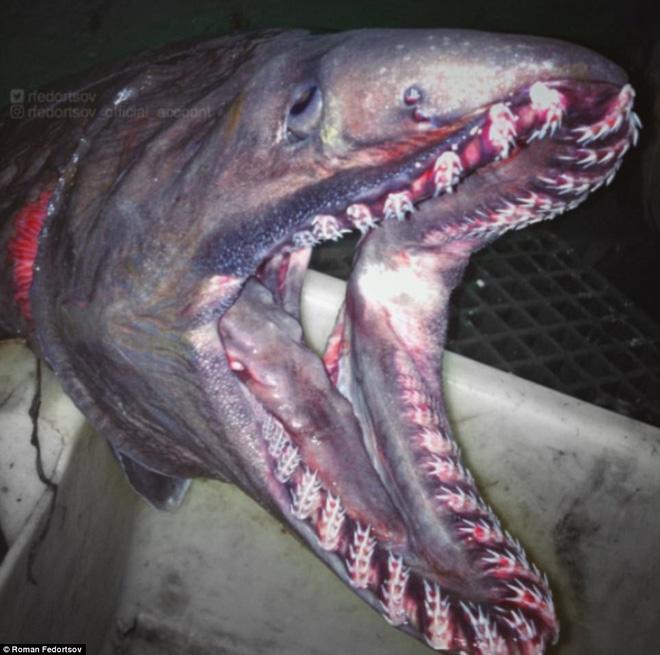 Choáng váng loạt sinh vật kì lạ dưới đáy biển sâu, thách thức sự can đảm của người xem 0022