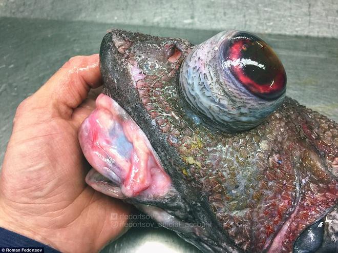Choáng váng loạt sinh vật kì lạ dưới đáy biển sâu, thách thức sự can đảm của người xem 0028