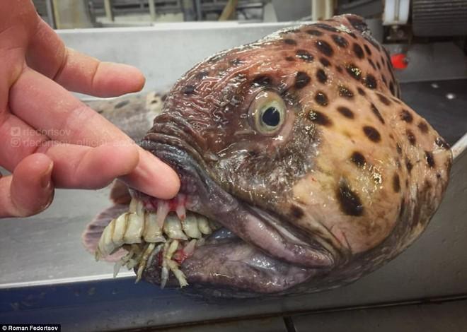 Choáng váng loạt sinh vật kì lạ dưới đáy biển sâu, thách thức sự can đảm của người xem 0027