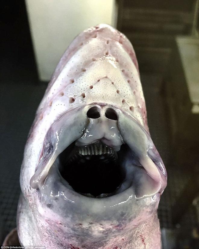 Choáng váng loạt sinh vật kì lạ dưới đáy biển sâu, thách thức sự can đảm của người xem 008