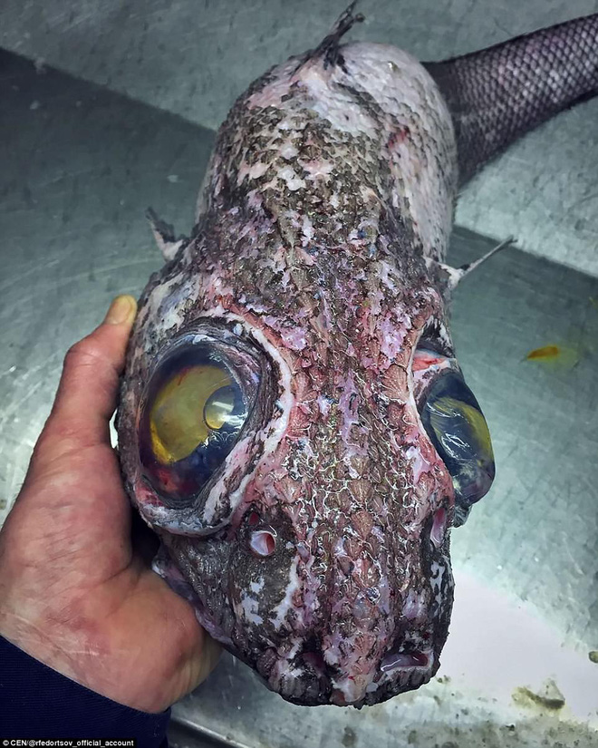 Choáng váng loạt sinh vật kì lạ dưới đáy biển sâu, thách thức sự can đảm của người xem 009