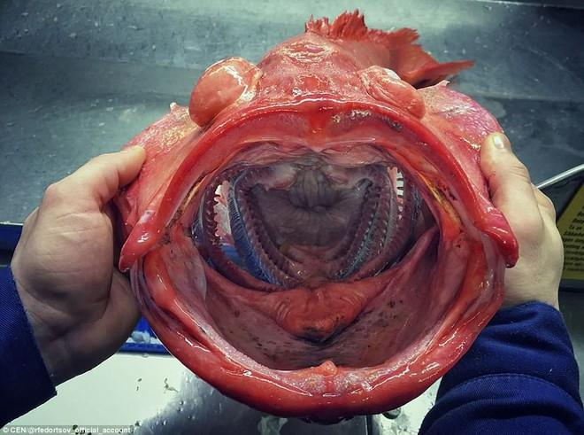 Choáng váng loạt sinh vật kì lạ dưới đáy biển sâu, thách thức sự can đảm của người xem 0017