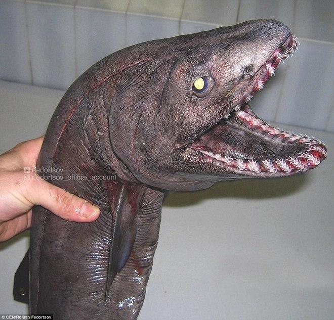 Choáng váng loạt sinh vật kì lạ dưới đáy biển sâu, thách thức sự can đảm của người xem 0015