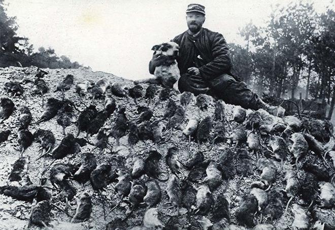 Kinh hoàng hàng triệu con chuột to như mèo khiến binh sĩ Thế chiến I khổ sở - Ảnh 4.