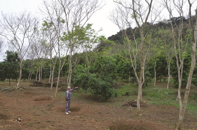 Một xã ở Việt Nam, nông dân chôn vàng ròng dưới đất, ra ngõ là gặp tỷ phú - Ảnh 1.