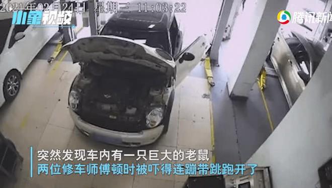 Kiểm tra động cơ ô tô, nhân viên sửa chữa giật bắn mình bỏ chạy sau khi chứng kiến cảnh này - Ảnh 2.