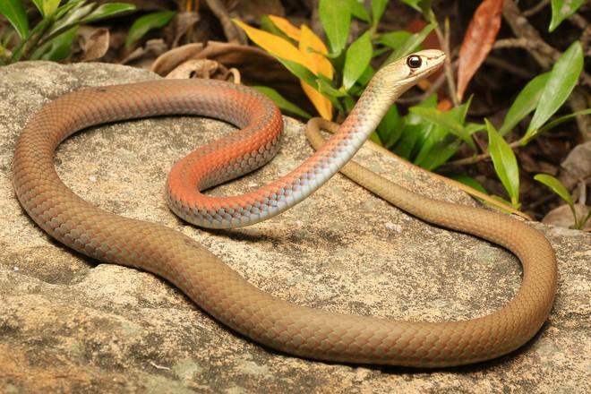 Chuyên gia đố xem ai tìm được con rắn trong bức ảnh, dân mạng vò đầu bứt tai nhìn không ra - Ảnh 6.