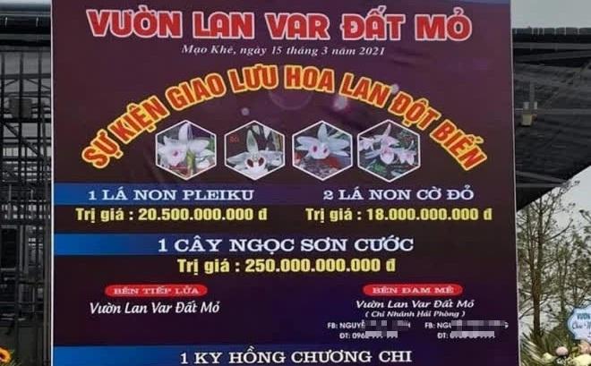"""""""Màn"""" mua bán lan đột biến gần 300 tỷ đồng ở Quảng Ninh: Đại diện Cục thuế nói gì?"""
