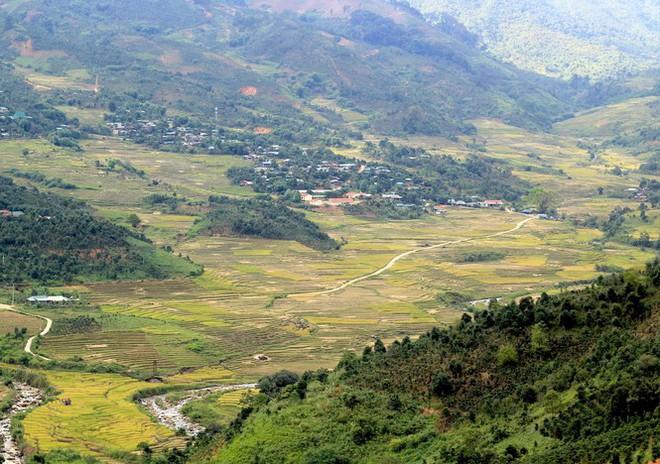 Kỳ lạ vườn sâm quý giúp giữ rừng ở Kon Tum - Ảnh 1.