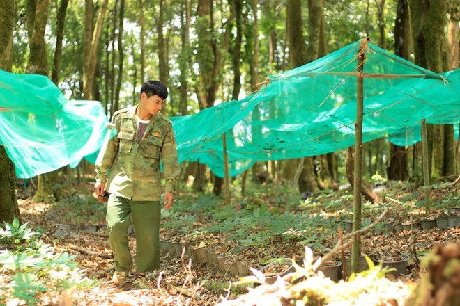 Kỳ lạ vườn sâm quý giúp giữ rừng ở Kon Tum - Ảnh 11.