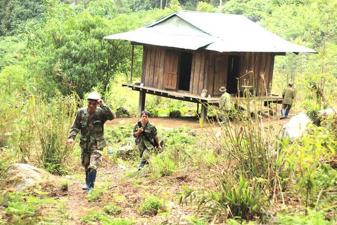 Kỳ lạ vườn sâm quý giúp giữ rừng ở Kon Tum - Ảnh 5.