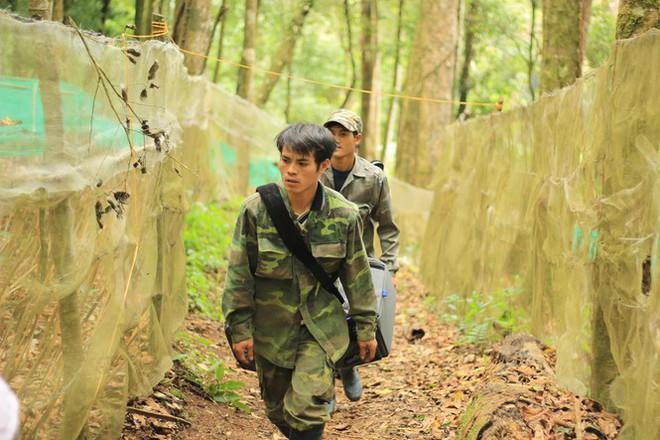 Kỳ lạ vườn sâm quý giúp giữ rừng ở Kon Tum - Ảnh 6.