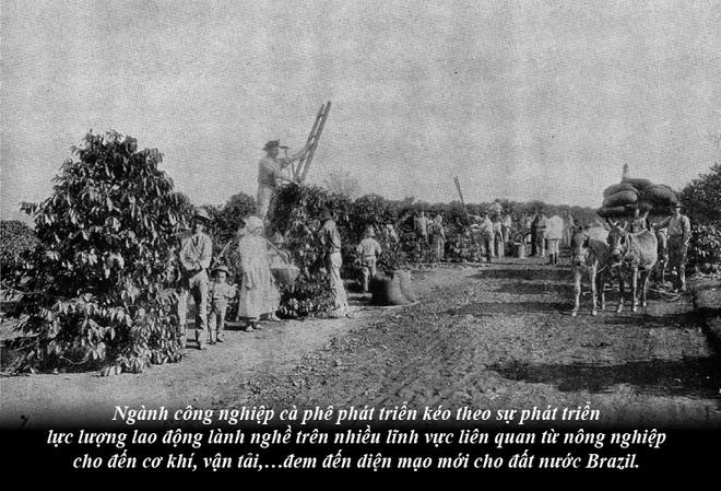 Brazil từ thuộc địa trở thành cường quốc cà phê thế giới - Ảnh 3.