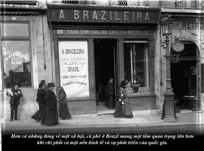 Brazil từ thuộc địa trở thành cường quốc cà phê thế giới - Ảnh 4.