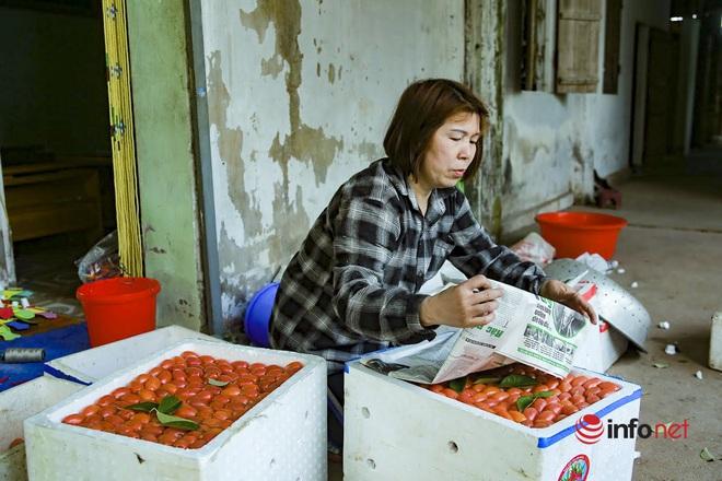 Trồng loại quả vừa chua vừa chát, người Hà Nội vẫn thu về trăm triệu đồng - Ảnh 6.