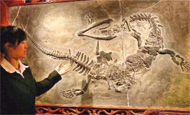 Lạc vào hang động bí ẩn trên núi, người nông dân bất ngờ tìm ra hóa thạch rồng dài hơn 7m: Chân tướng ra sao? - Ảnh 5.