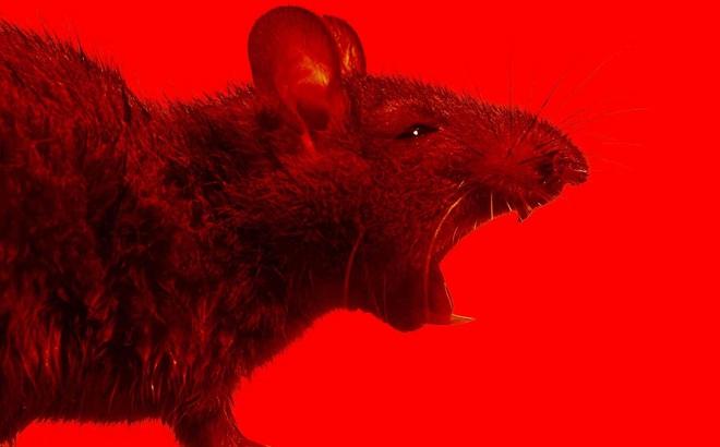 """Cuộc """"đổ bộ"""" và hoành hành của hàng chục triệu con chuột sau trận lũ lịch sử: Úc vẫn chưa hết khổ!"""