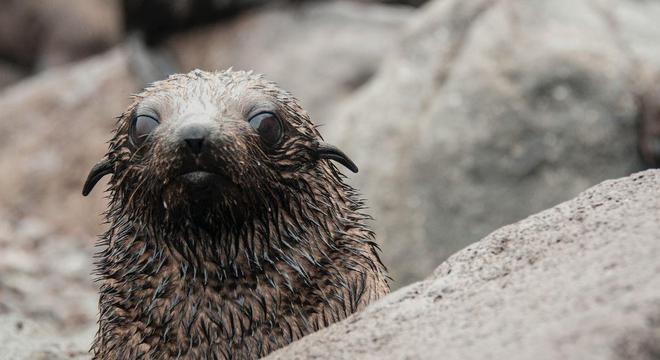 4 loài động vật của đại dương sống lại sau bờ vực tuyệt chủng 002