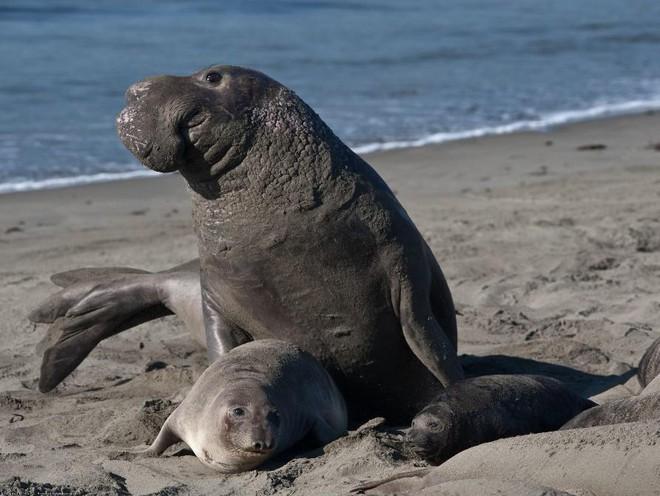 4 loài động vật của đại dương sống lại sau bờ vực tuyệt chủng 003