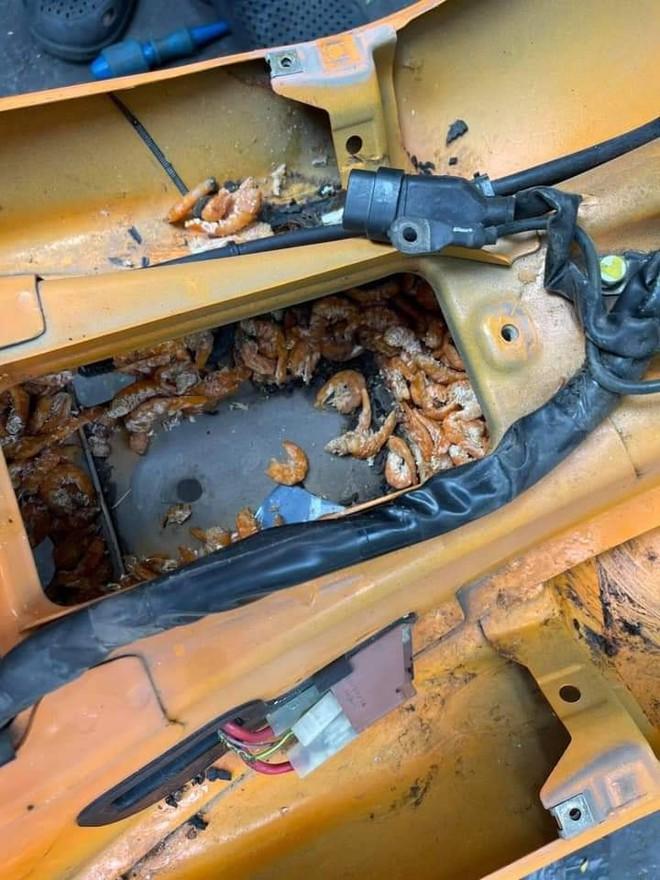 Mang xe đi sửa, cô gái choáng váng khi phát hiện đồ bên trong, nhiều người thấy nổi da gà - Ảnh 2.