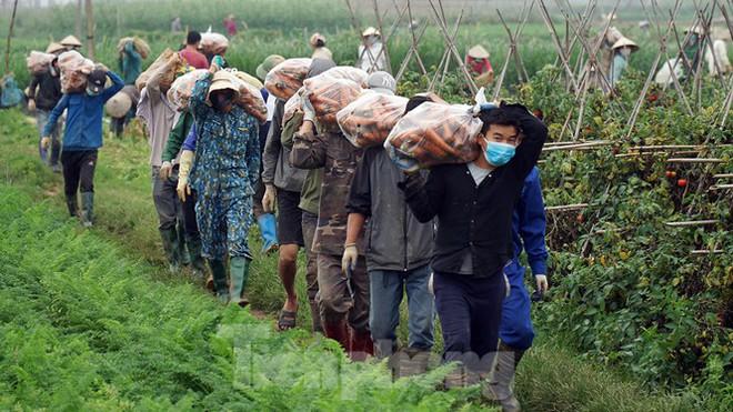 Vào vựa rau lớn nhất Chí Linh sau khi gỡ lệnh phong tỏa - Ảnh 3.