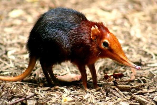 Phát hiện đáng sợ: Trái Đất sẽ có loài chuột độc, có thể phun nọc độc giống loài rắn - Ảnh 3.