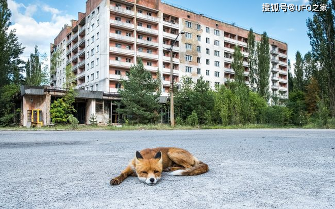 Tại sao bức xạ Chernobyl khiến động vật chết hàng loạt nhưng thực vật phát triển ngày càng tươi tốt? - Ảnh 5.