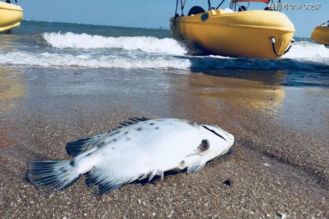 Sau trận động đất, cá chết hàng loạt xuất hiện ở bờ biển của Nhật Bản, chuyện gì sắp xảy ra? - Ảnh 5.