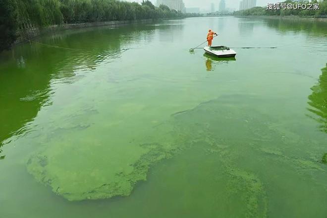 Sau trận động đất, cá chết hàng loạt xuất hiện ở bờ biển của Nhật Bản, chuyện gì sắp xảy ra? - Ảnh 4.