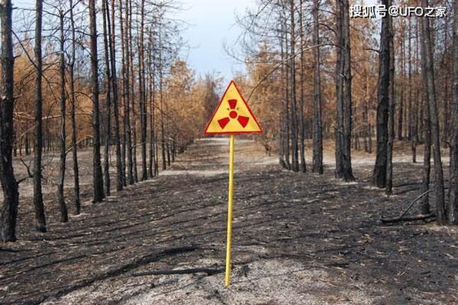 Tại sao bức xạ Chernobyl khiến động vật chết hàng loạt nhưng thực vật phát triển ngày càng tươi tốt? - Ảnh 1.