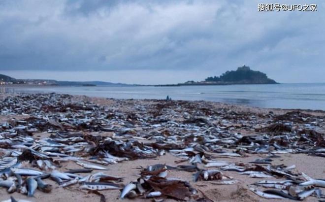 Sau trận động đất, cá chết hàng loạt xuất hiện ở bờ biển của Nhật Bản, chuyện gì sắp xảy ra?