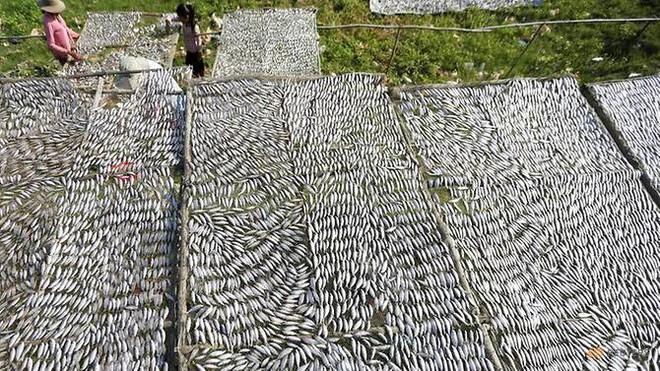 Người Campuchia khốn khổ vì đói cá: Lời cảnh báo về những thay đổi liên quan TQ trên dòng Mekong? - Ảnh 2.