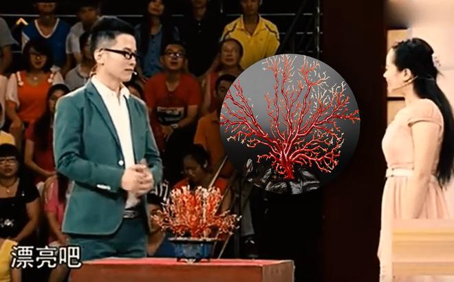 Nữ sinh mang chậu cây đi kiểm định bảo vật, bị khán giả coi thường - Chuyên gia: Đừng vội cười, đây là san hô máu!