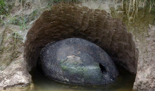 Phát hiện vật thể lạ trên cánh đồng, cứ ngỡ hòn đá nhưng sự thật lại là thứ không ai ngờ tới - Ảnh 3.
