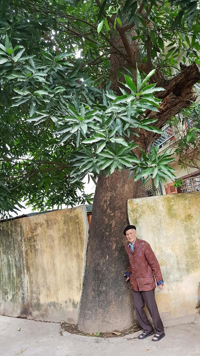 Chín cây muỗm nghìn năm ở đền Voi Phục - Ảnh 1.