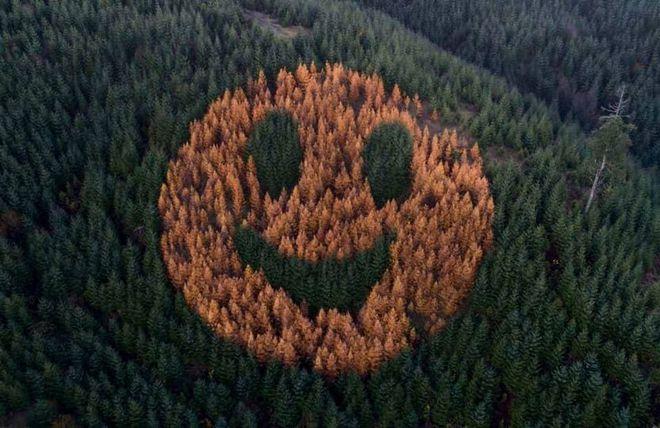 Mặt cười khổng lồ từ cây xanh xuất hiện trên sườn đồi - Ảnh 1.