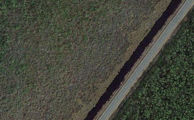 Thứ gì đó đang giết chết cây cối, biến những khu rừng ở bờ đông nước Mỹ thành 'rừng ma'