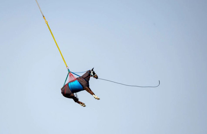 7 ngày qua ảnh: Vận chuyển ngựa bằng trực thăng ở Thụy Sĩ - Ảnh 11.