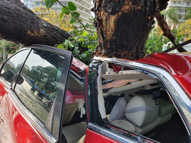 Cây xanh bật gốc đè nát ô tô trong khu nhà giàu ở Sài Gòn, tài xế hoảng loạn kêu cứu - Ảnh 2.