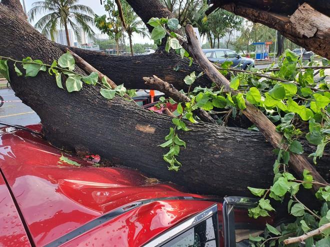 Cây xanh bật gốc đè nát ô tô trong khu nhà giàu ở Sài Gòn, tài xế hoảng loạn kêu cứu - Ảnh 3.