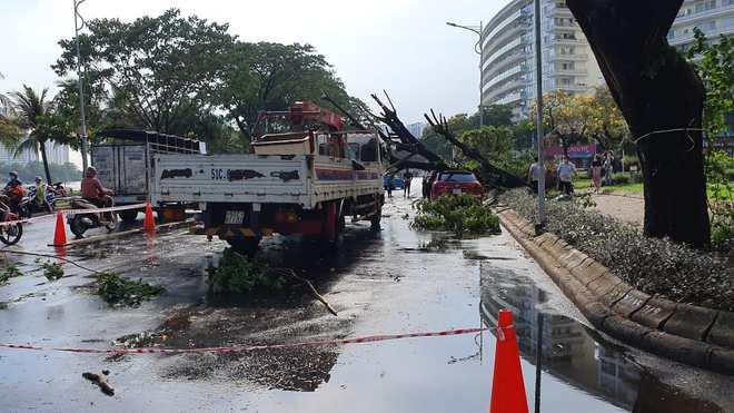 Cây xanh bật gốc đè nát ô tô trong khu nhà giàu ở Sài Gòn, tài xế hoảng loạn kêu cứu - Ảnh 1.