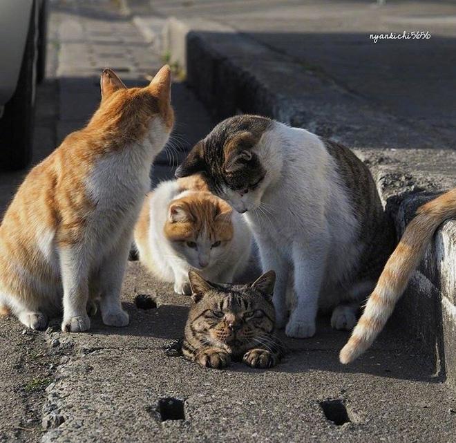 Thấy đồng bọn không may bị lọt cống, bầy mèo hoang có hành động phũ phàng khiến dân mạng cười ngả nghiêng - Ảnh 3.