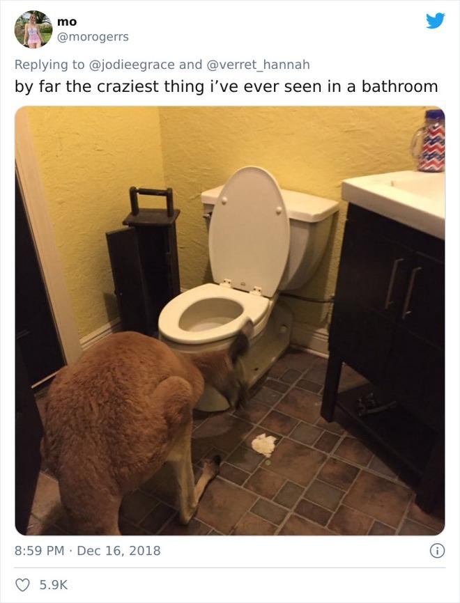 Kiểm tra phòng tắm của bạn trai, tá hỏa trước mấy món đồ kì cục 008