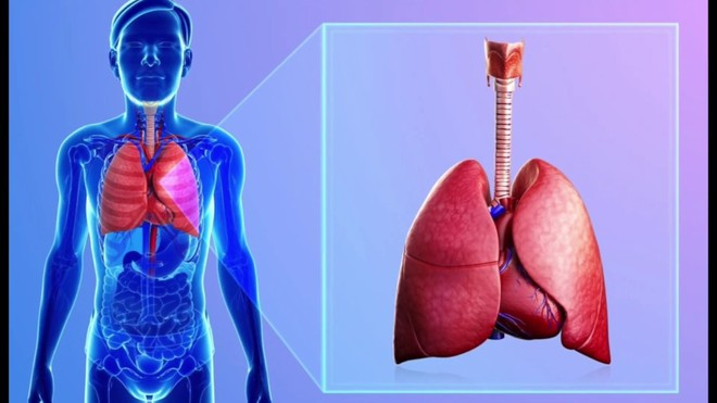 Dấu hiệu nhận biết 5 cơ quan nội tạng bị bẩn: Hãy thử đối chiếu xem cơ thể bạn có sạch không? - Ảnh 1.