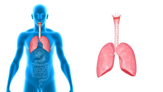 Dấu hiệu nhận biết 5 cơ quan nội tạng bị bẩn: Hãy thử đối chiếu xem cơ thể bạn có sạch không? - Ảnh 2.