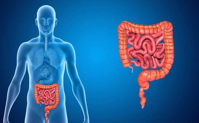 Dấu hiệu nhận biết 5 cơ quan nội tạng bị bẩn: Hãy thử đối chiếu xem cơ thể bạn có sạch không? - Ảnh 6.