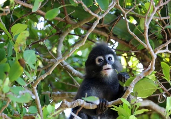 Cứu chú khỉ con, khoảng 2 tháng sau hơn 20 người thoát chết trong gang tấc - Ảnh 1.