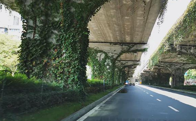 """Phần lớn các chân cầu đều có loại cây này bên dưới: Không phải ngẫu nhiên, chúng hoàn toàn là do """"có sắp đặt"""""""