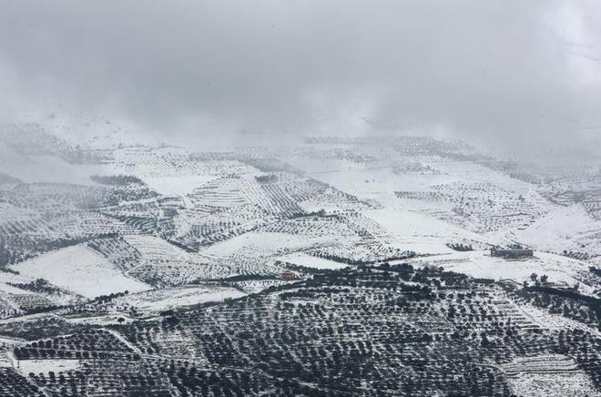 Hài hước cảnh lạc đà ngơ ngác khi thấy tuyết rơi ở Ả Rập Saudi - Ảnh 5.